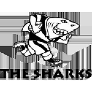 Coastal Sharks